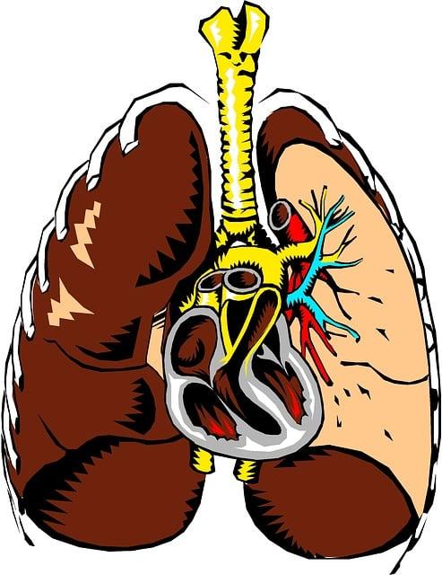 poumons cure de saison